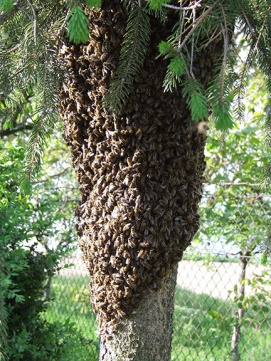 bees-1007453_1920-6in